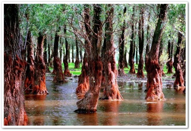flora delta dunari