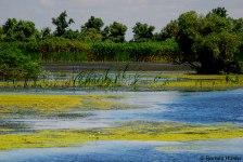 peisaj delta dunarii
