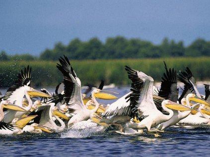 fauna delta dunarii